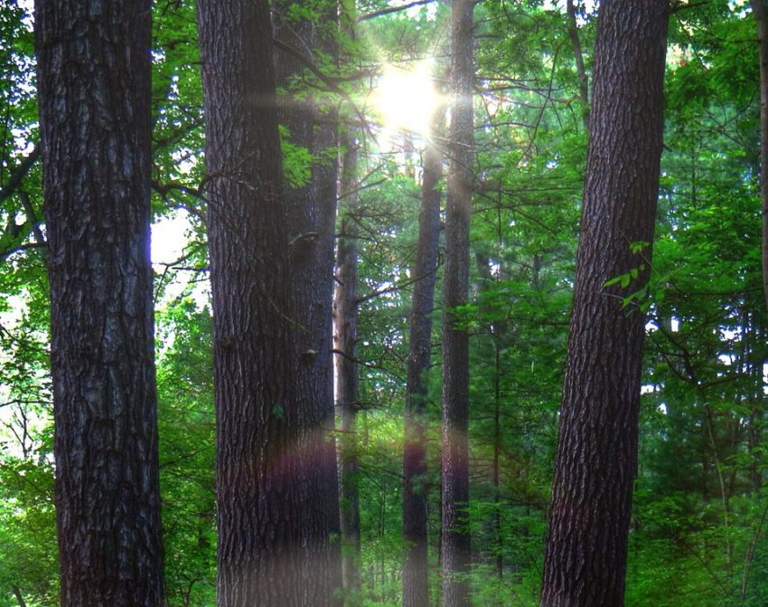A Recent Session & the Discernment of Psychic Sources
